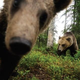 Matka-karhut